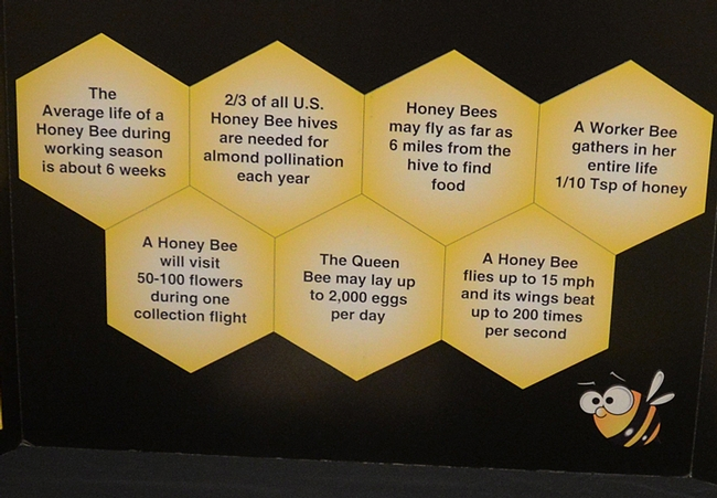 Some facts about bees, from the California State Beekeepers' Association. (Photo by Kathy Keatley Garvey)