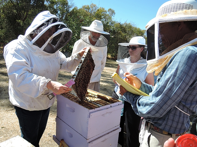 Extension apiculturist Elina Niño (left) with participants in a beekeeping course at UC Davis. (Photo by Kathy Keatley Garvey)