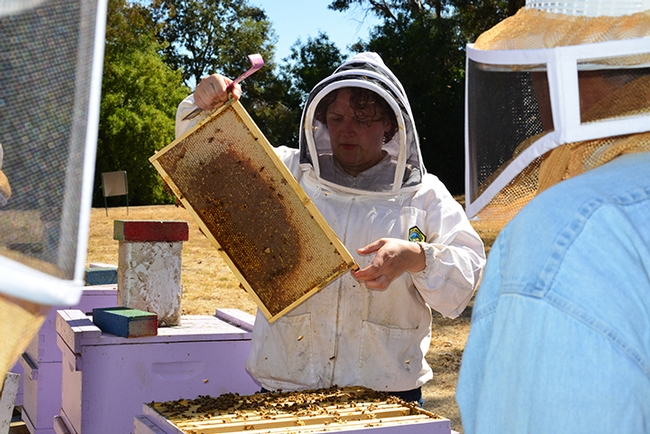 Extension apiculturist Elina Niño pulls out a frame at a UC Davis beekeeping course. (Photo by Kathy Keatley Garvey)