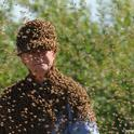 Bee wrangler Norm Gary clustered with bees. (Photo by Kathy Keatley Garvey)