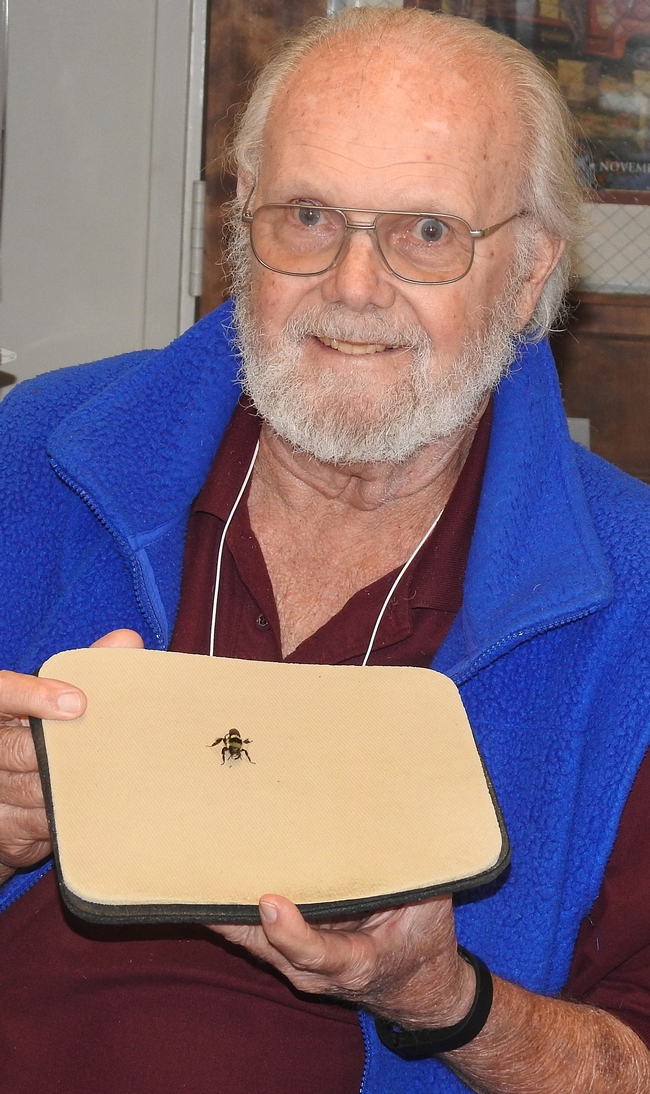 Robbin Thorp with a bumble bee gyne that flew into his office. (Photo by Kathy Keatley Garvey