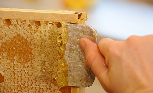Honey comb being processed. (Photo by Kathy Keatley Garvey)