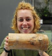 Bohart Museum of Entomology volunteer Riley Gilmartin of Davis shows a chunk of wood with beetle galleries. (Photo by Kathy Keatley Garvey)