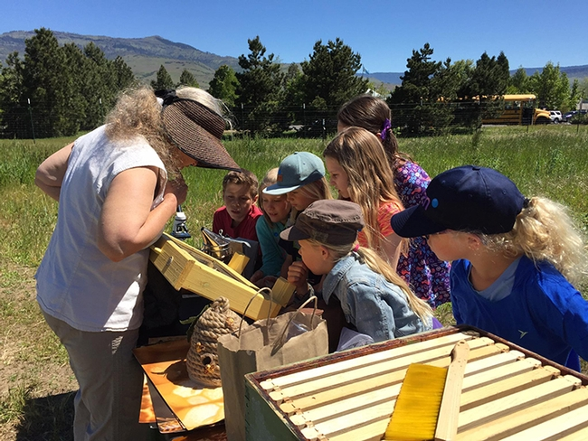 Youngsters are awed by the bee display, part of Bee Girl Sarah Red-Laird's activities. This is a photo from a southern Oregon program. (Photo courtesy of Sarah Red-Laird)