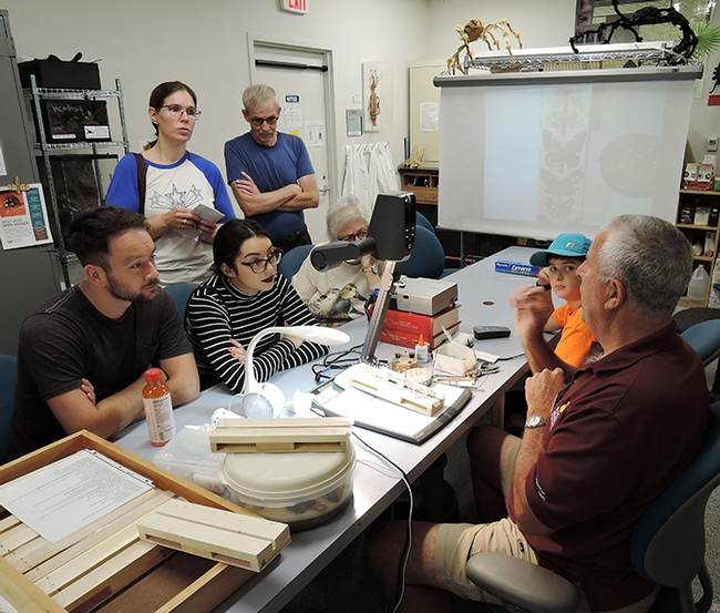 An interested group watches as entomologist Jeff Smith (right), curator of the Lepitopdera collection at the Bohart Museum, demonstrates how to prepare butterfly and moth specimens. (Photo by Kathy Keatley Garvey)