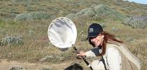 Leslie Saul-Gershenz in the Channel Island National Park conducting a native bee survey. for Bug Squad Blog