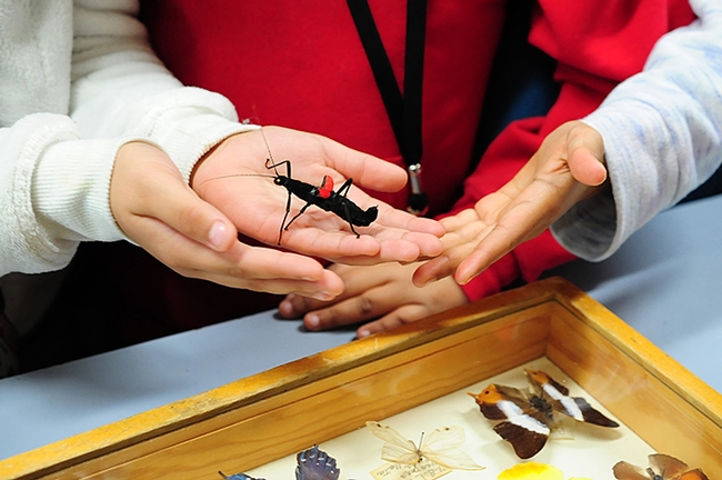 A Peruvian walking stick changes hands among children visiting the Bohart Museum of Entomology. (Photo by Kathy Keatley Garvey)