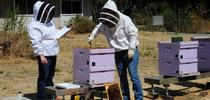 Elina Lastro Niño (left) tests a prospective graduate of the California Master Beekeeper Program. (Photo by Kathy Keatley Garvey) for Bug Squad Blog