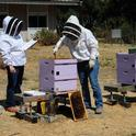 Elina Lastro Niño (left) tests a prospective graduate of the California Master Beekeeper Program. (Photo by Kathy Keatley Garvey)