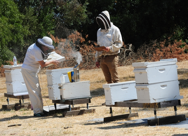 Beekeeper Charley Nye (right), manager of the Harry H. Laidlaw Jr. Honey Bee Research Facility, scores an applicant in the California Master Beekeeper Program. (Photo by Kathy Keatley Garvey)