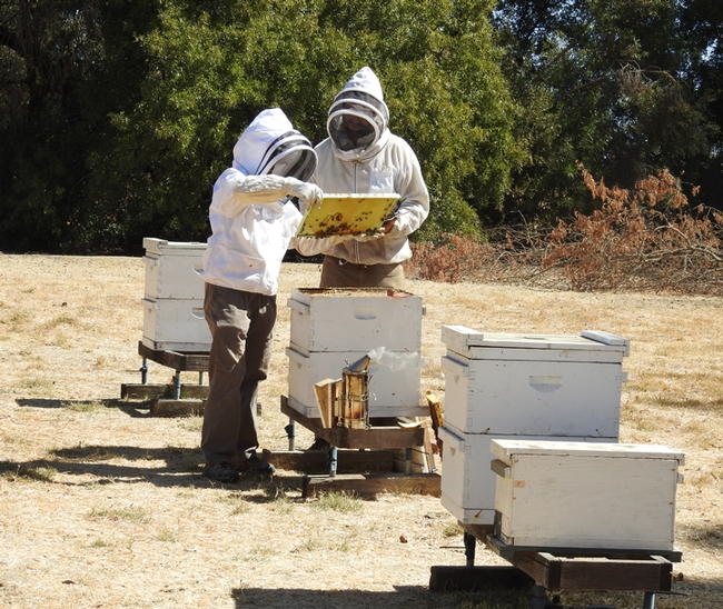 This was the scene at the Harry H. Laidlaw Research Facility, UC Davis, for a testing of applicants for the California Master Beekeeper Program. (Photo by Kathy Keatley Garvey)