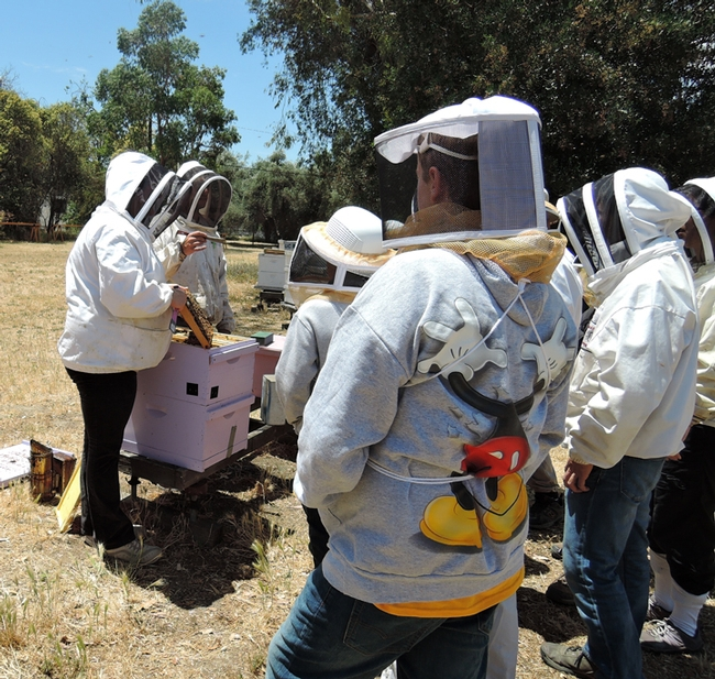 Extension apiculturist Elina Lastro Niño (left) demonstrates how to open a hive to a UC Davis summer camp. She'll be giving three live bee demonstrations at the California Honey Bee Festival: the first at 11:15, then 1 p.m. and the third at 3:45 in the bee tent. (Photo by Kathy Keatley Garvey)