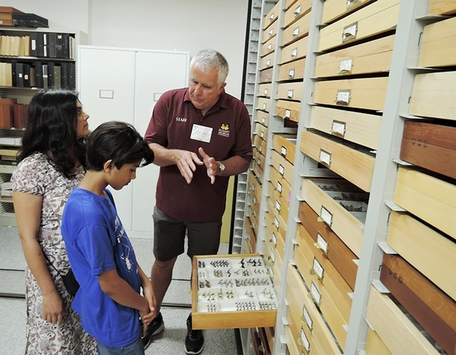 Entomologist Jeff Smith, who curates the butterfly and moth display at the Bohart Museum of Entomology, shows Los Altos residents Prerna Jain and her son Prakrit Jain part of the collection. (Photo by Kathy Keatley Garvey)