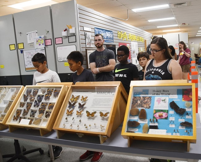Visitors learned about the fascinating world of insects. (Photo by Kathy Keatley Garvey)