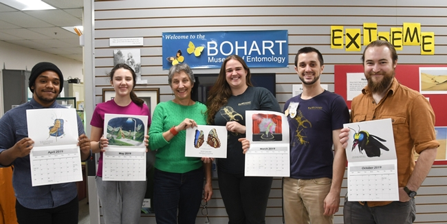 Displaying the innovative Bohart Museum calendars are museum associates and the director. From left are UC Davis entomology student Abram Estrada; intern Sophia Lonchar of The Met High School, Sacramento; Bohart Museum director Lynn Kimsey; UC Davis entomology student Wade Spencer, and Bohart scientist Brennen Dyer, a recent entomology graduate. (Photo by Kathy Keatley Garvey)