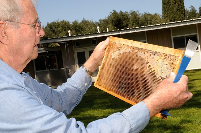 Norm Gary, emeritus professor of entomology at UC Davis, examines a frame at the Harry H. Laidlaw Jr. Honey Bee Research Facility. (Photo by Kathy Keatley Garvey)