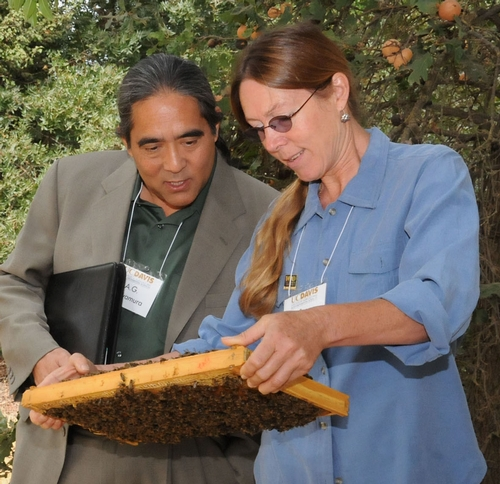BEE BREEDER-GENETICIST Susan Cobey shows A. G. Kawamura, secretary of the California Department of Food and Agriculture, her line of New World Carniolans during his recent visit to the Harry H. Laidlaw Jr. Honey Bee Research Facility at the University of California, Davis. In his youth, Kawamura reared bees. (Photo by Kathy Keatley Garvey)