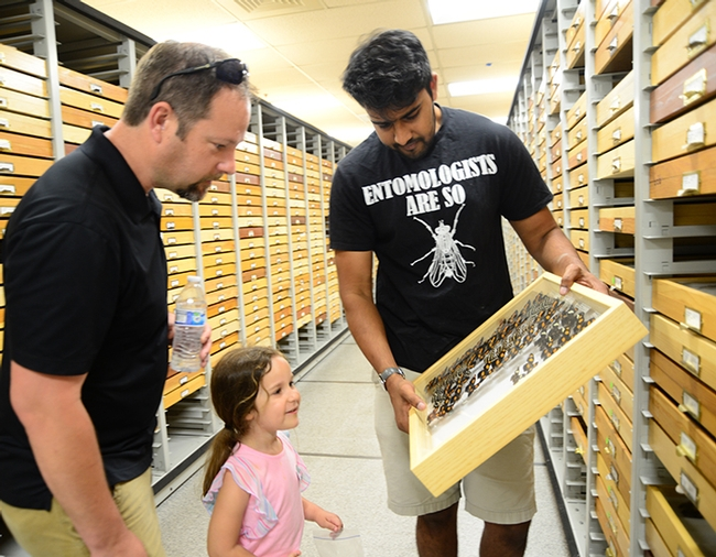 UC Davis entomology student and Bohart associate Lohit Garikipati shows butterfly specimens to Olivia Bingen, 4, and her father, Steve Bingen of the UC Davis Department of Music. (Photo by Kathy Keatley Garvey)