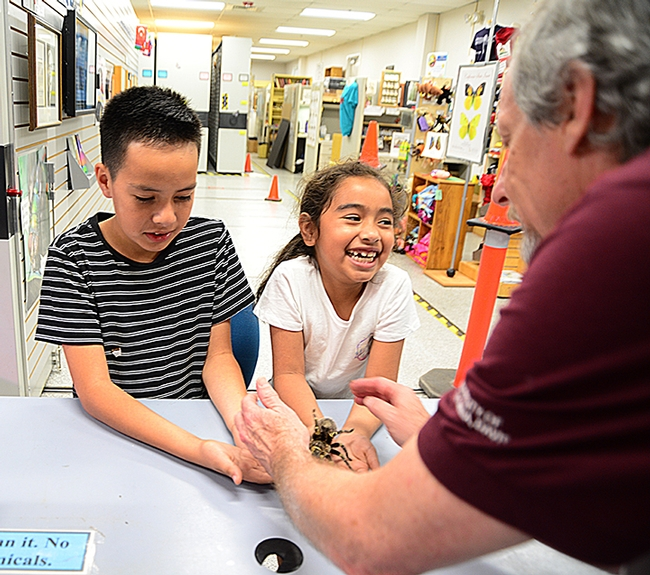 It tickles! Camilla Fuerte, 7,  reacts to a tarantula as her brother Joel Fuerte, 10, takes it all in stride. They are the children of Gabby Sanchez Fuerte of the Department of Materials Science and Engineering, College of Engineering. In the foreground is senior museum scientist Steve Heydon of the Bohart Museum of Entomology. (Photo by Kathy Keatley Garvey)