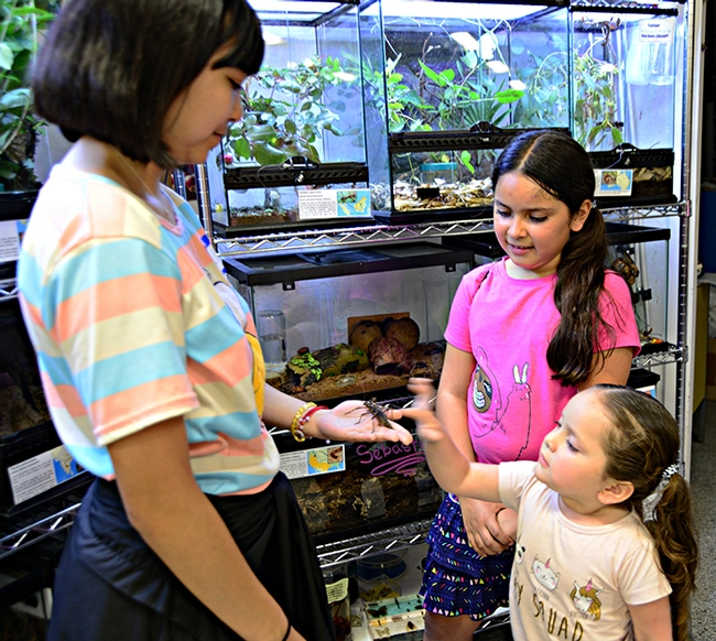 Ilyssa Boco, first-year entomology student at UC Davis, shows stick insects to Camellia Aranda, 8, and her sister, Isabella, 4. Their mother, Laura Aranda, works with the administrative Orange Cluster, which serves the Department of Political Science, and Department of Communication and Linguistics. (Photo by Kathy Keatley Garvey)