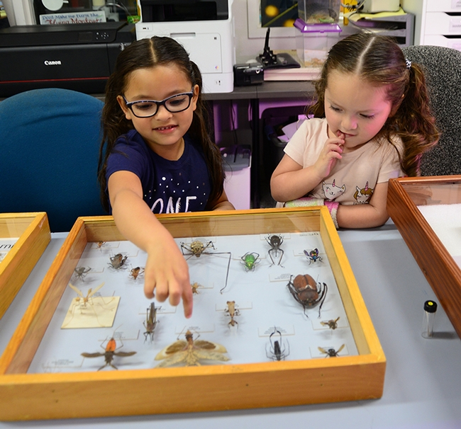 Ximena Aranda, 6, and her sister, Isabella, 3, check out the insect specimens at the Bohart Museum of Entomology. Their mother, Laura Aranda, works with the administrative Orange Cluster, which serves the UC Davis Department of Political Science and the Department of Communication and Linguistics. (Photo by Kathy Keatley Garvey)