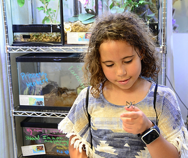 McKenzie Kennedy, 8, granddaughter of UC Davis employee Sherly Blackshire, proudly holds a stick insect. (Photo by Kathy Keatley Garvey)