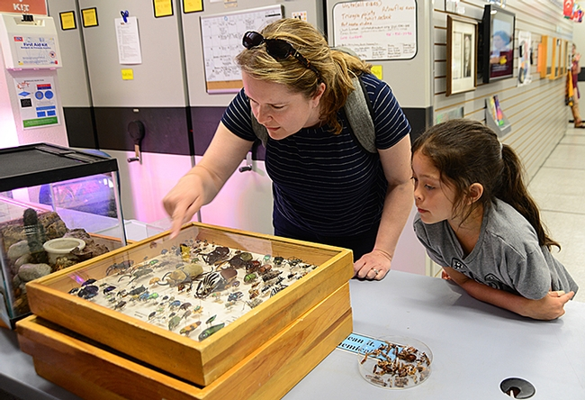 Katie Eting, 6, and her mother Jennifer Eting learn about the insect specimens at the Bohart Museum of Entomology. (Photo by Kathy Keatley Garvey)