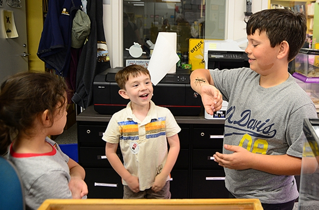 C. J. Babowal (center), 5, delights in seeing a stick insect on the arm of his brother, Roger Babowal, 9. At left is Katie Eting,6. The boys' mother, Crystal Babowal, works in UC Davis Continuing Education. Katie's mother, Jennifer Eting, works in Finance Operations and Administration. (Photo by Kathy Keatley Garvey)