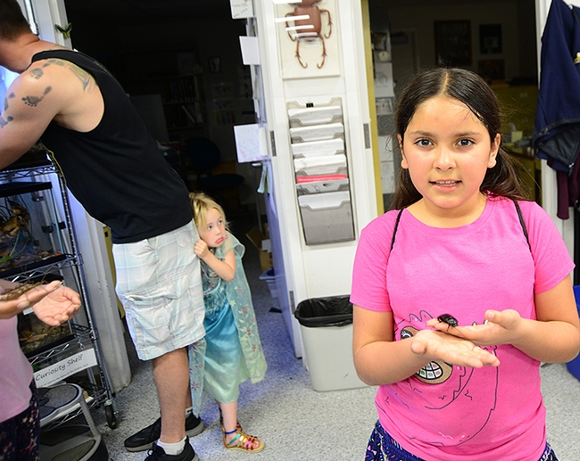 "Camellia Aranda (foreground) likes a Madagascar hissing cockroach. In the background, Julianna ""Ju Ju"" Smith, 4, isn't so sure, as she hides behind the  her father, Justin Smith of Animal Science. (Photo by Kathy Keatley Garvey)"