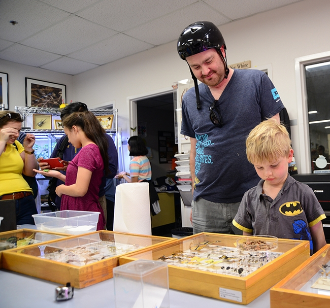 Simon Dvorak, who works with UC Davis Academic Technology Services, visited the Bohart Museum of Entomology with his son Max, 7. (Photo by Kathy Keatley Garvey)