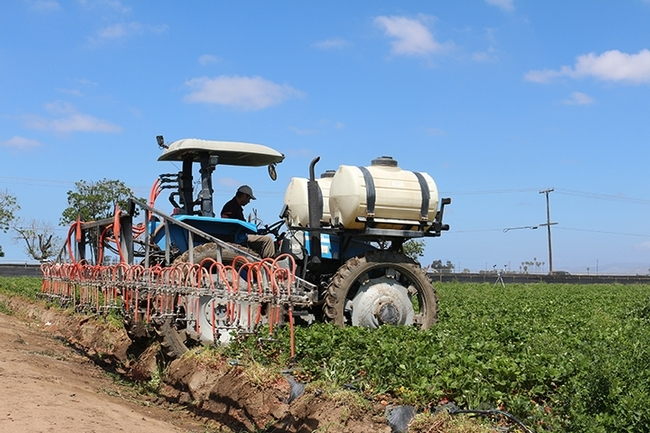 A spray rig in a strawberry field. (Photo by Christian Nansen)