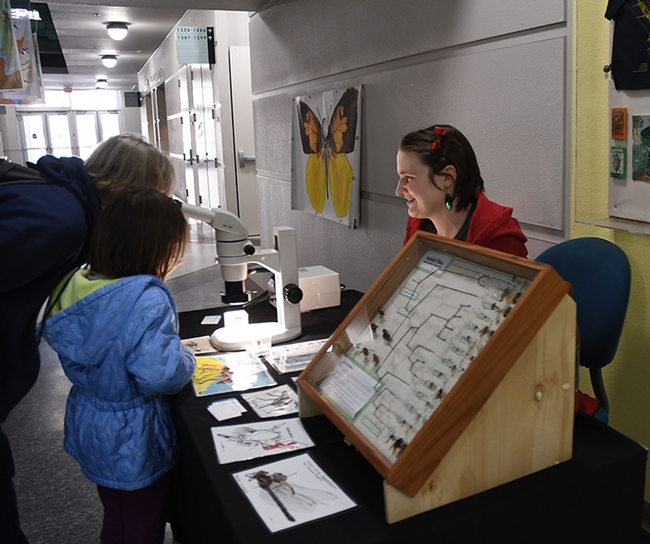 Doctoral student Charlotte Alberts explains her research on assassin flies, also known as robber flies. (Photo by Kathy Keatley Garvey)