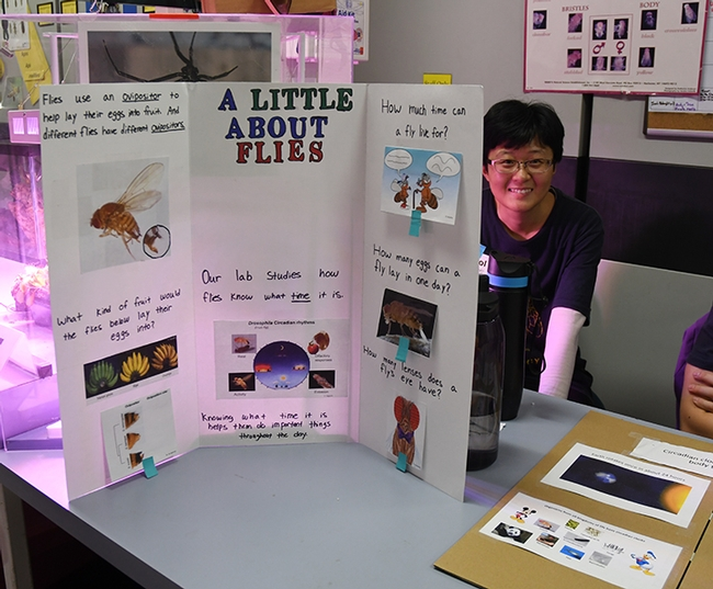 Graduate student Nitrol Liu of the Joanna Chiu lab shows a fruit fly poster. (Photo by Kathy Keatley Garvey)