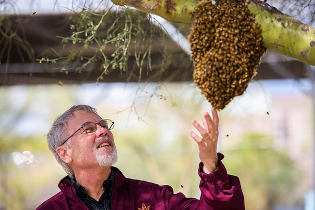 Robert E. Page Jr. examines a bee swarm. He is the author of a new book,