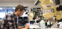 Cooperative Extension specialist Ian Grettenberger at work in his lab at UC Davis. (Photo by Kathy Keatley Garvey) for Bug Squad Blog