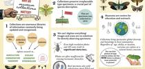 This is the infographic that won Jill Oberski a first-place award in the Entomological Society of America's graduate student competition. for Bug Squad Blog
