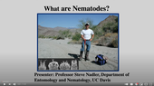 Nematologist Steve Nadler, professor and chair of the UC Davis Department of Entomology and Nematology, presenting a video on nematology. (Screen shot)