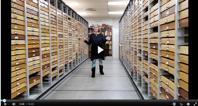 UC Davis entomology professor Diane Ullman offers a virtual tour of the Bohart Museum of Entomology's Lepidoptera collection in this video. (Screen shot)