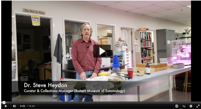 Senior museum scientist Steve Heydon of the Bohart Museum of Entomology, gives an overview of how the museum collects, preserves and identifies some of its nearly 8 million insects. (Screen shot)