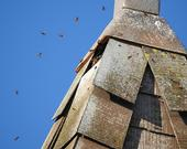 Honey bees head into their home in the the bell tower of the Epiphany Episcopal Church, Vacaville. (Photo by Kathy Keatley Garvey)