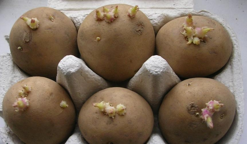 Potato Primer The Backyard Gardener Anr Blogs