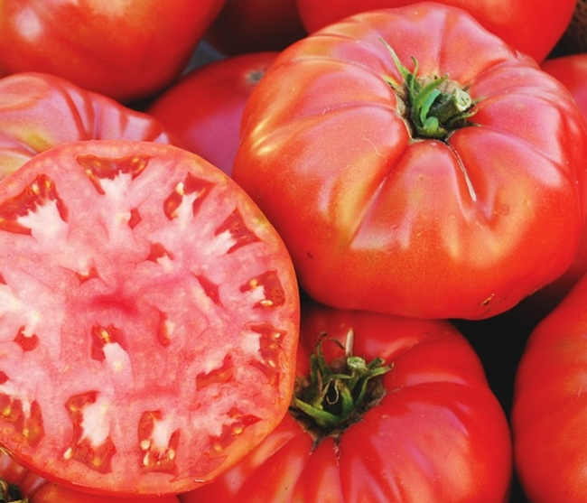 Red tomatoes, one slide. Photo credit R. Caldwell.