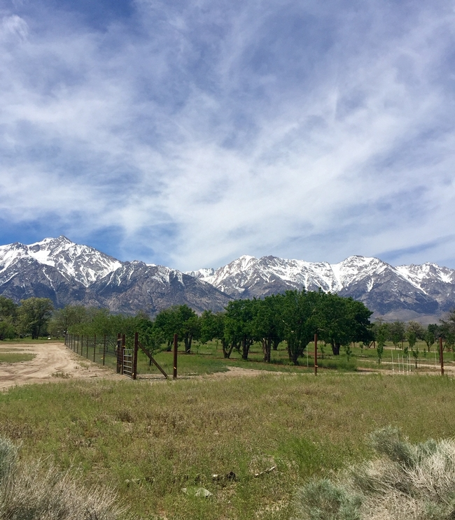 The Manzanar Orchards