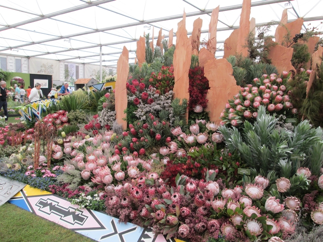 Proteas from South Africa