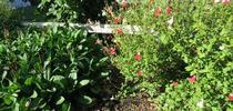 Water wise for A Garden Runs Through It - UCCE Master Gardeners of Colusa County Blog