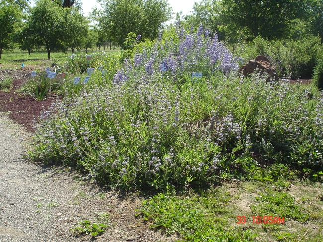 Native plants in the spring.