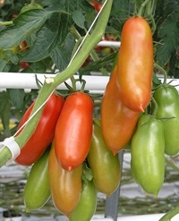 Choosing Seeds Hybrid And Heirloom The Real Dirt Blog Anr Blogs