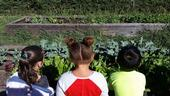 Kids watching the plants grow by Karina Hathorn