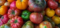 Heirloom tomatoes by Kim Schwind for The Real Dirt Blog Blog
