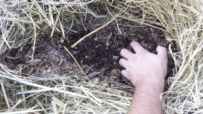 No Till, 3 months after adding 3 inches chicken manure, wood chip and straw mix and keeping moist, Kevin Marini